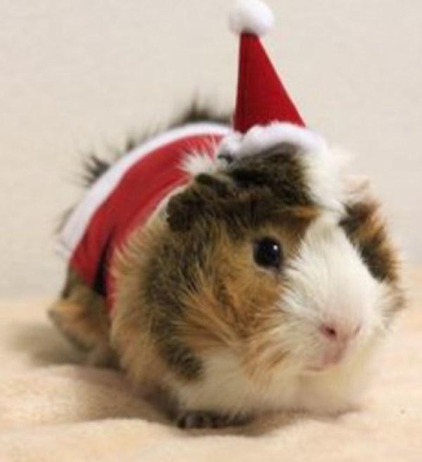 Top 10 Festive Animals Dressed As Santa