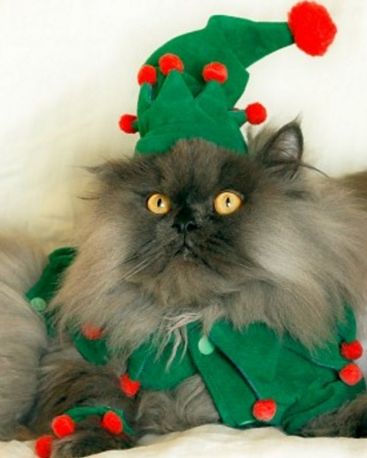 Top 10 Festive Costume Christmas Tree Cats