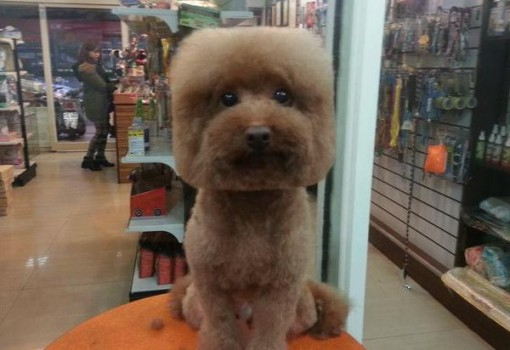 Top 10 Four Equal Sided Dog Square Grooming