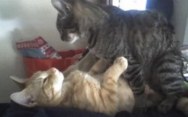Top 10 Life Saving Cats Practicing CPR