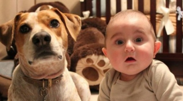 Top 10 Lovable Dogs That Look Like Babies