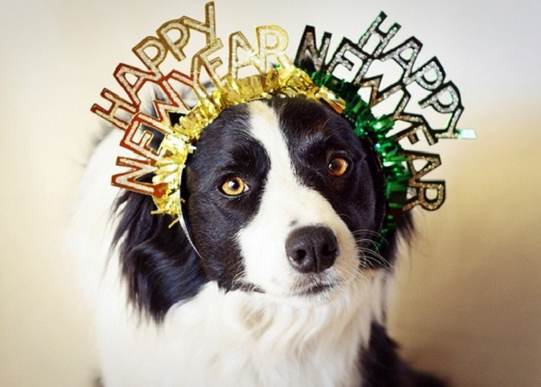 Top 10 New Year's Resolutions For Dogs and Humans