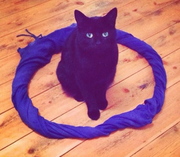 Top 10 Trapped And Surrounded Cats (Cat Circles)