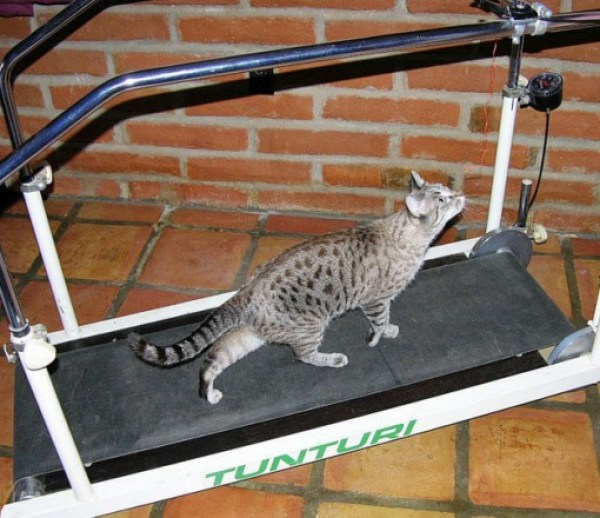 Top 10 Weight Loss Journey Cats At The Gym