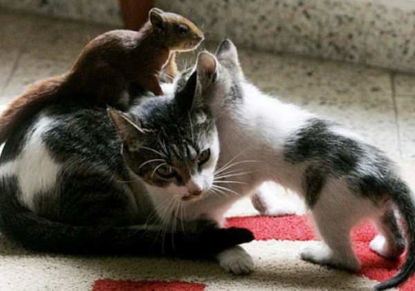 Top 10 Animals on Cats Treating Them Like Taxis