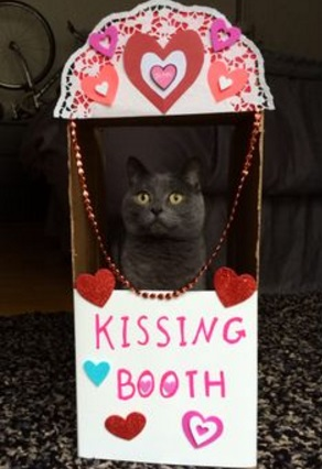 Top 10 Super Smoochy Kissing Booth Cats