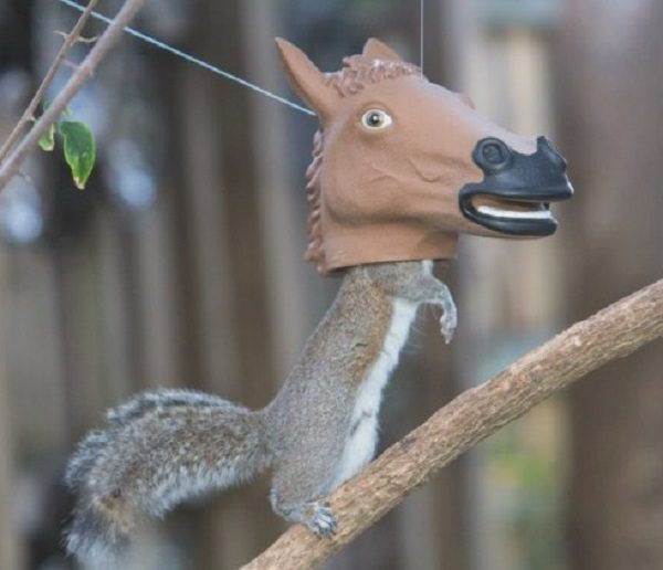 Ten of the Worlds Most Amazing and Unusual Squirrel Feeders