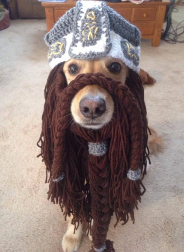 Dog With A Beard