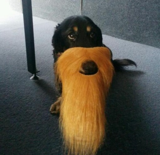 Top 10 Alpha Male Dogs With Beards