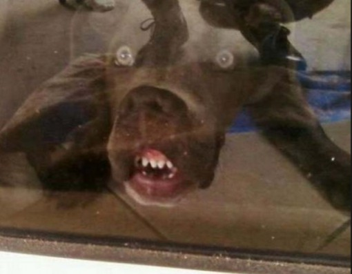 Top 10 Barking Mad Dogs With Crazy Faces