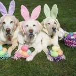 Top 10 Clue Hunting Dogs On Easter Egg Hunts