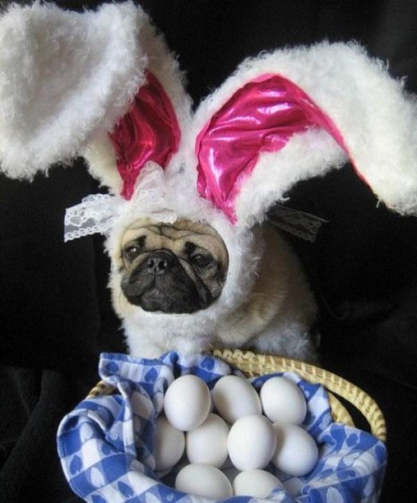 Dog On a Easter Egg Hunt