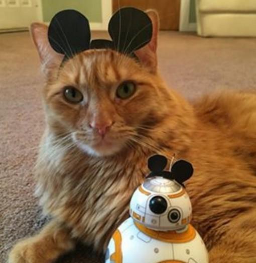 This Cat Loves Walt Disney