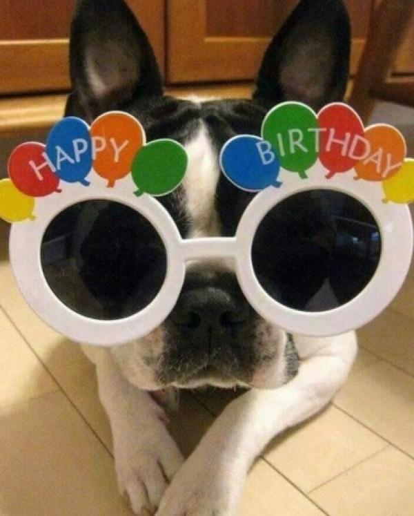 Dog Celebrating a Birthday