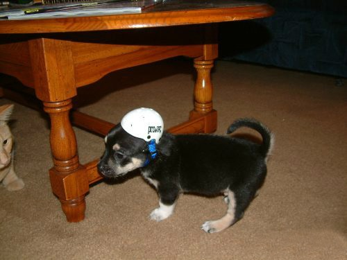 Top 10 Safety First Dogs Using Safety Helmets