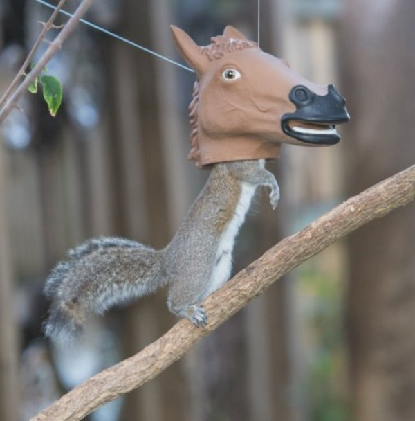 Horses Head Squirrel Feeder