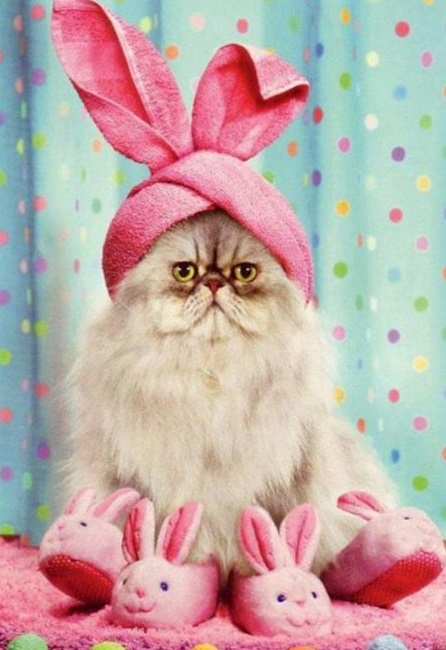 Cat Dressed As Easter Bunny
