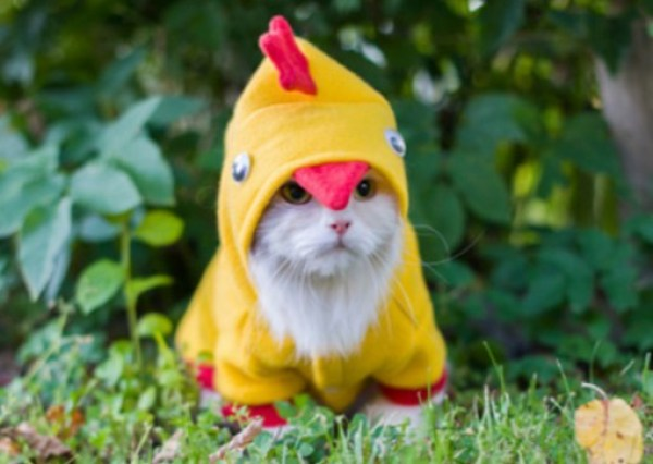 Cat Dressed As Easter Chick