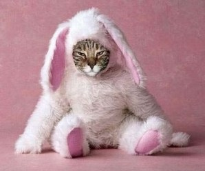 Top 10 Award Winning Cats In Easter Costumes