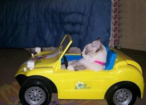 Cat Driving A Buggy