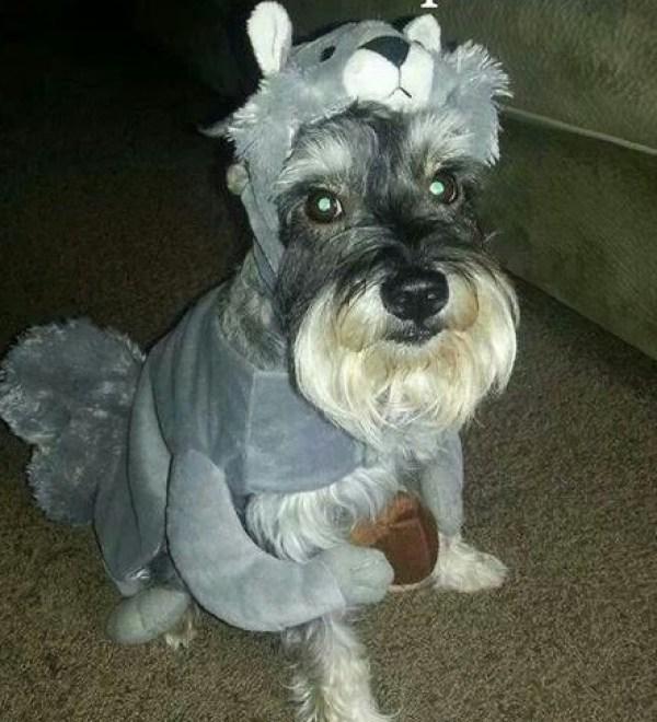 Dog Dressed As a Squirrel