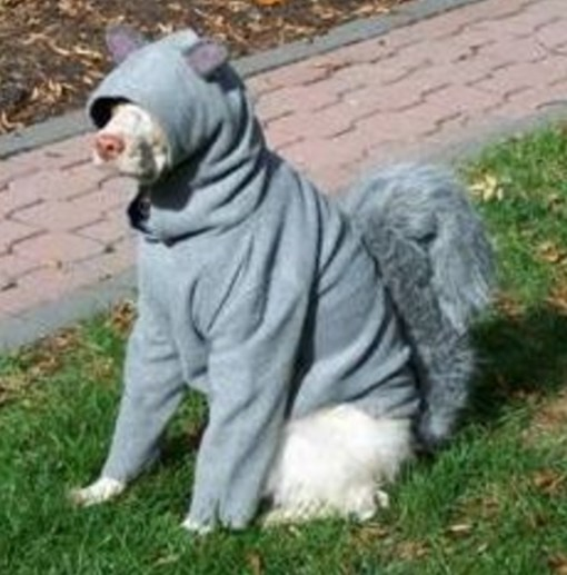 Top 10 Very Nutty Dogs Dressed As Squirrels