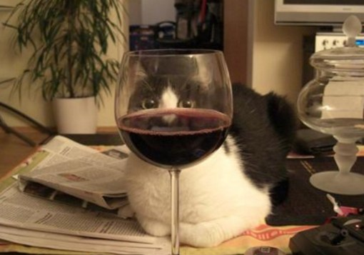 Wine-Loving Cat