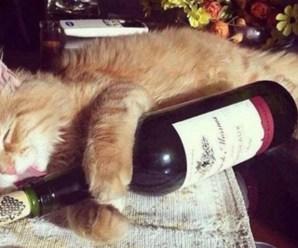 Top 10 Wine Loving Cats At Wine O'Clock
