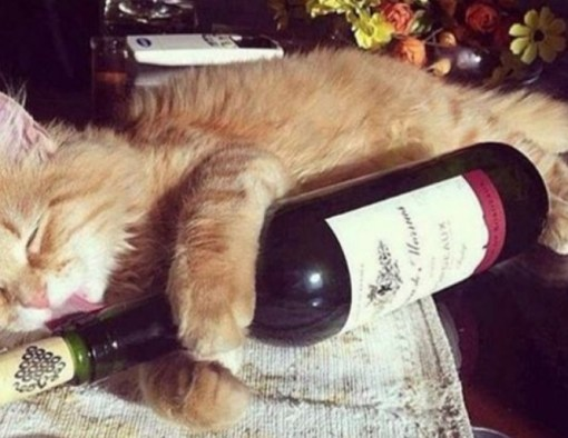 Top 10 Wine Loving Cats At Wine O'Clock