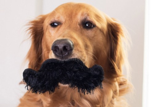 Top 10 Dashing and Debonair Dogs With Moustaches