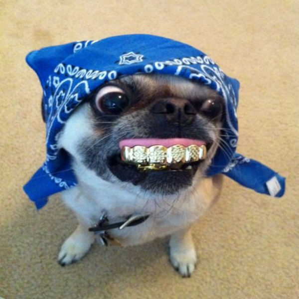 Ten Dogs With False Teeth Who Don't Need to See the Dentist