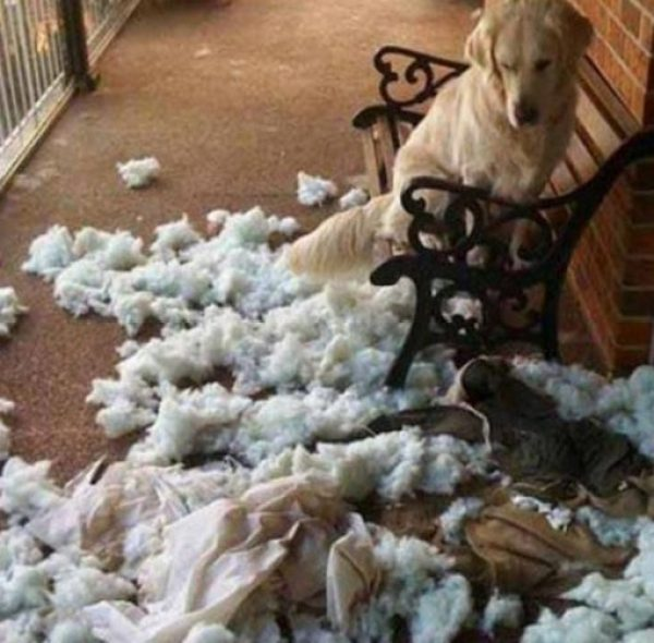 Guilty Dog