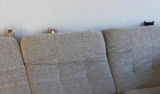 Cats Peeking Over A Sofa
