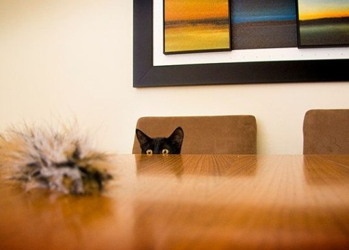 Cat Peeking Over A Table