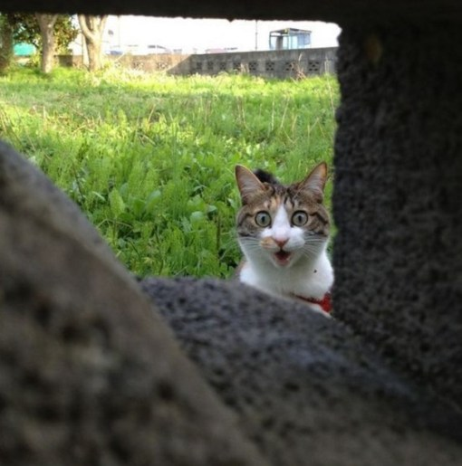 Cat Peeking Through a Brick