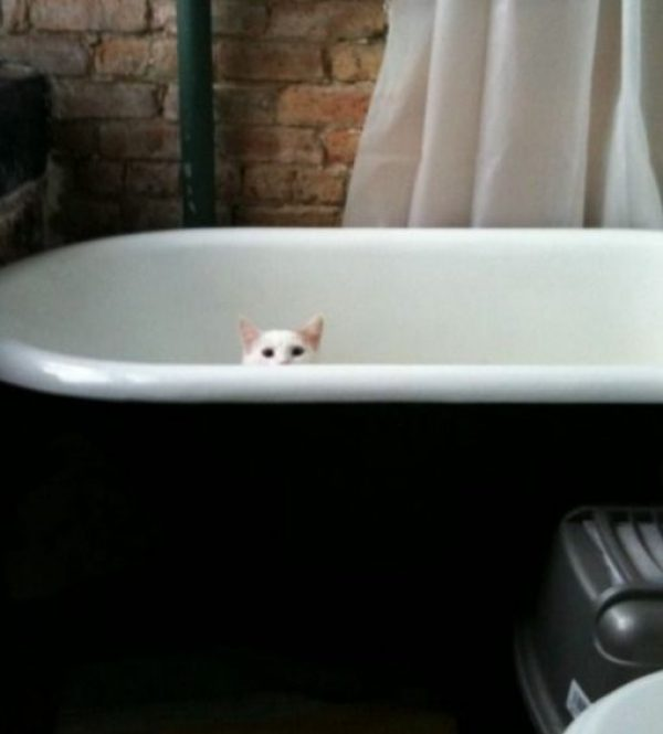Cat Peeking Over A Bath