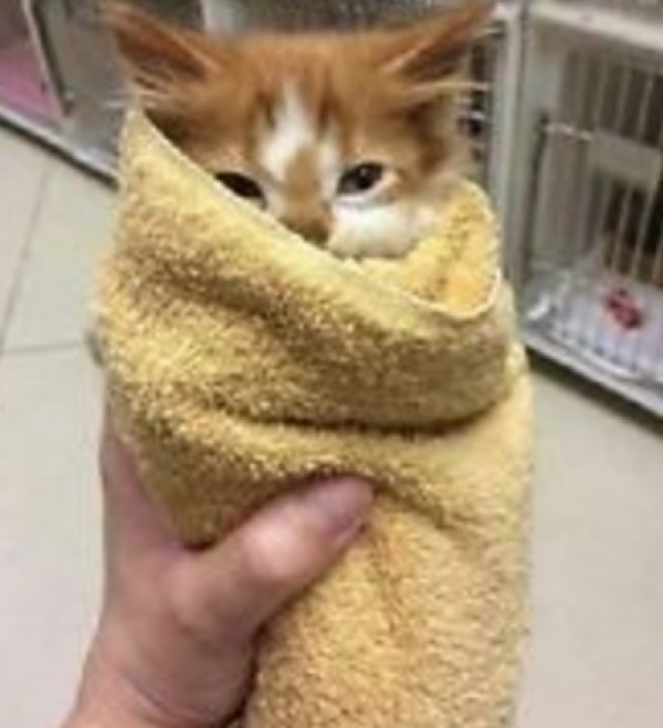 Cat Looks Like a Mexican Burrito