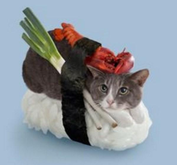 Cat Looks Like Sushi