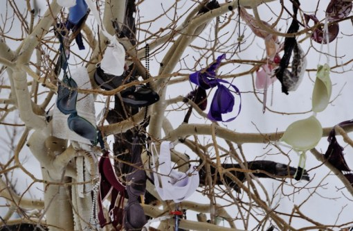 Bras in Trees