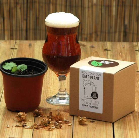 Superb Grow Your Own Beer Plant