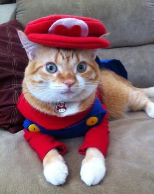 Super Mario: Cat Cosplay
