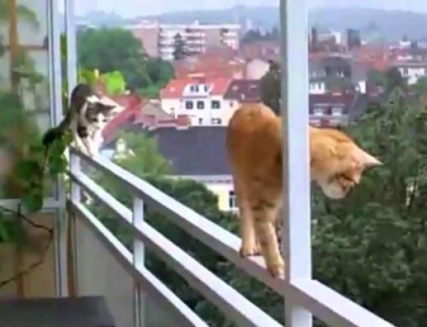 Cat Balanced On Edge
