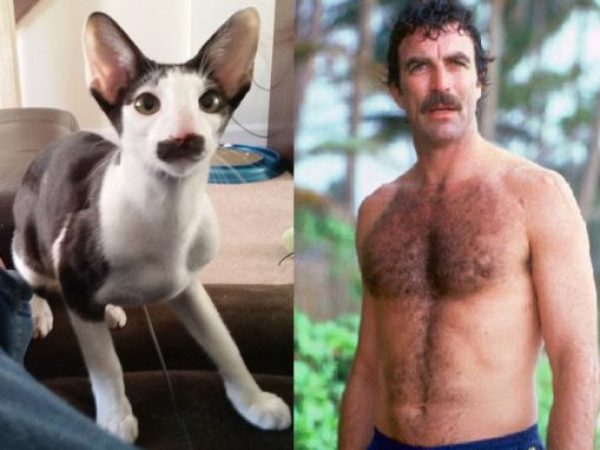 Magnum P.I. Cat