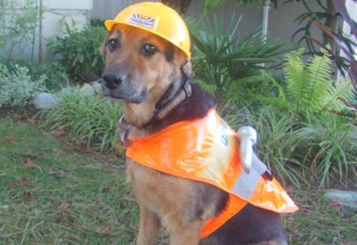 Dog Wearing Building Site Safety Equipment