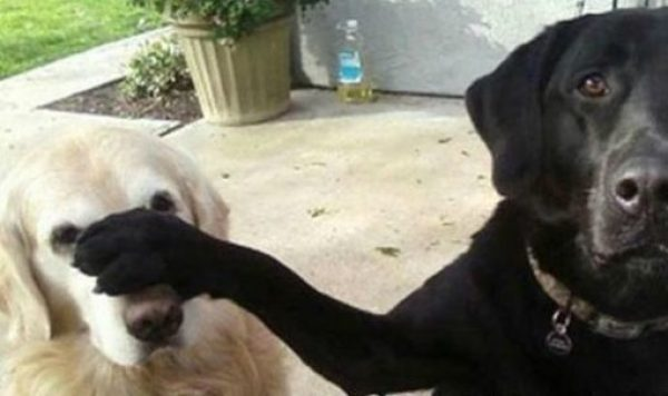 Dog With a Bad Friend