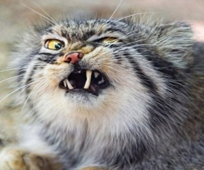 Top 10 Funniest Images Of Cats Pulling Faces
