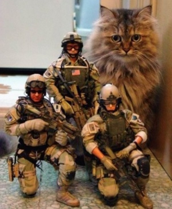Army Cat With Troops