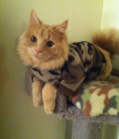 Army Cat Posing