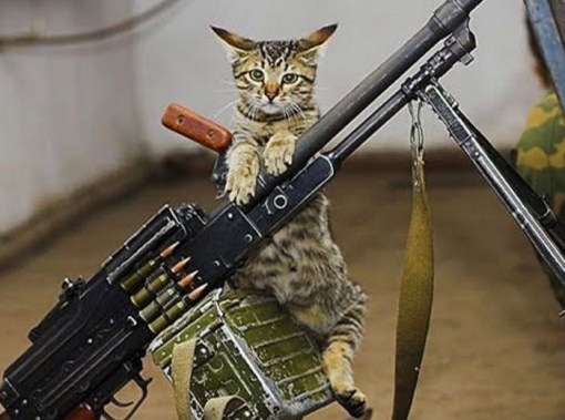 Army Cat With Machine Gun