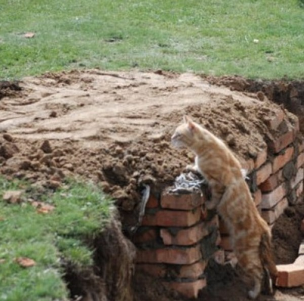 Army Cat Going Over The Wall